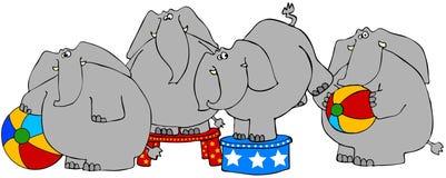 Éléphants de cirque Images stock