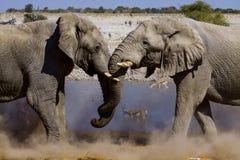 Éléphants de combat image stock