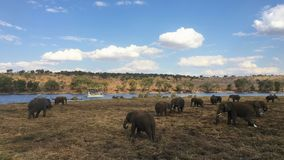 Éléphants de Kalahari au parc national de Chobe au Botswana Image libre de droits
