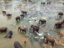 Éléphants de rivière Image stock