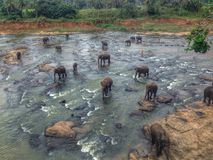 Éléphants de rivière Photographie stock libre de droits