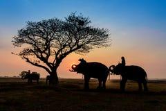 Éléphants de silhouette se tenant sous l'arbre Photo stock