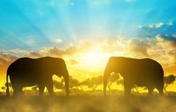 Éléphants de silhouette sur la savane Photo libre de droits