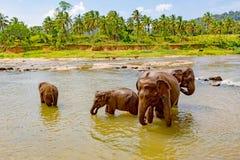 Éléphants drôles en rivière Images libres de droits