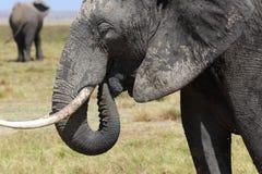 Éléphants en Afrique Photo stock