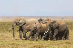 Éléphants en Afrique Photos libres de droits