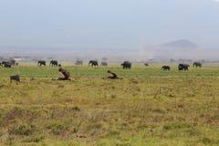 Éléphants en Afrique Photos stock