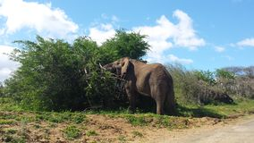 Éléphants en Afrique du Sud Images stock