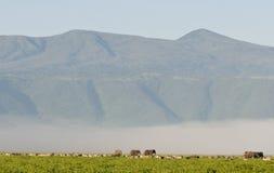 Éléphants en cratère de Ngorongoro Photo stock
