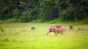 éléphants en parc national chitwan, Népal banque de vidéos