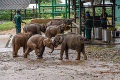 Éléphants en parc national d'Udawalawe sur Sri Lanka image libre de droits