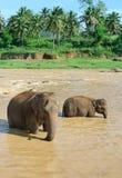 Éléphants en rivière Photographie stock libre de droits