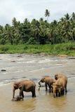 Éléphants en rivière Images stock