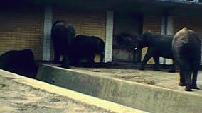 Éléphants en 1970 s de zoo de Berlin clips vidéos