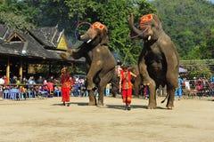 Éléphants en tant que ¼ de touristes Chine d'Attractionï photo libre de droits