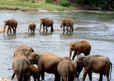 éléphants entendus Photographie stock libre de droits