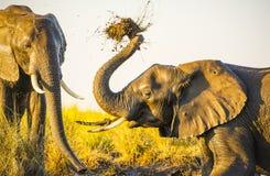 Éléphants jouant dans la boue photo libre de droits