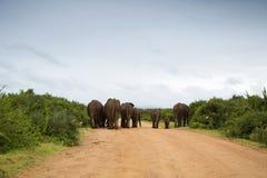 Éléphants marchant dans la route Images libres de droits