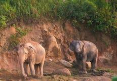 Éléphants marchant dans le soleil de matin image libre de droits