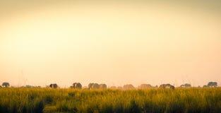 Éléphants marchant loin sur les plaines africaines Photographie stock libre de droits