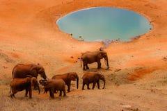 Éléphants par le regroupement Photos stock