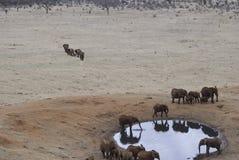 Éléphants par le waterhole Image stock