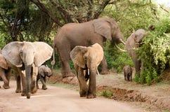 Éléphants, parc national de Manyara de lac photo libre de droits