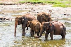 Éléphants pataugeant la rivière images libres de droits