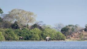 Éléphants sauvages et paysage dans Sri Lanka Photographie stock