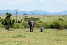 Éléphants sur le masai Mara Images libres de droits