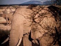Éléphants sur le safari Photos libres de droits