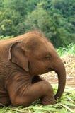 Éléphants thaïlandais de bébé Photos stock