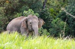 Éléphants thaïlandais, mère et sa marche de bébé Photos libres de droits