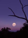 Élévation de lune Photographie stock libre de droits