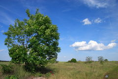 Él es un paisaje vernal. Foto de archivo