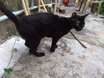 Él gato negro tan lindo fotos de archivo libres de regalías