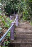 Él pasos concretos en la calzada asiática del bosque imagenes de archivo