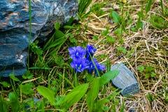 Él primavera del ` s aquí es un manzano la floración después de fuertes lluvias imágenes de archivo libres de regalías