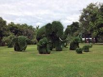Élagage d'arbre à la forme d'éléphant, grand un éléphant et beaucoup SM image stock