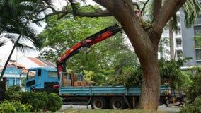 Élagage d'arbre à Singapour banque de vidéos