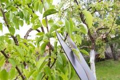 Élagage des arbres Photographie stock libre de droits