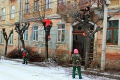 Élagage les arbres dans l'hiver Images stock