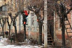 Élagage les arbres dans l'hiver Photo libre de droits
