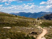 Élans frôlant le long de la traînée dans le pré de montagne, Rocky Mountain National Park photographie stock libre de droits