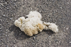 Élans ou fourrure de cariboo Images stock