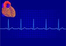Électrocardiogramme bleu 3 de Heart& Images libres de droits