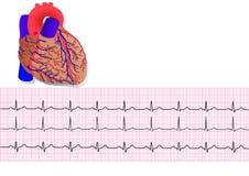 Électrocardiogramme de Heart& Image libre de droits