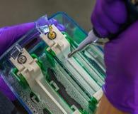 Électrophorèse de gel Photos libres de droits