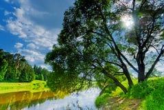 Élevage branchu d'arbre à feuilles caduques Image libre de droits