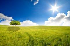 Élevage d'arbre Images libres de droits